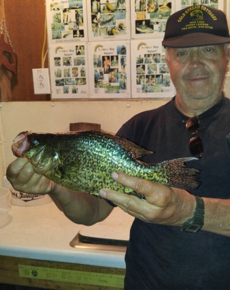 Rich C. with a 14 inch crappie from a nearby lake, September, 2015.