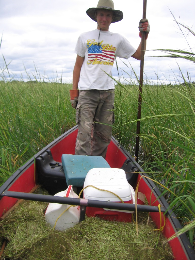 Ben and I harvested some excellent wild rice, September 1, 2013.