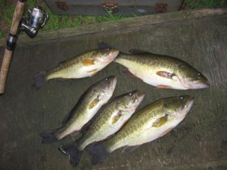The bass came from Benoit Lake in August.