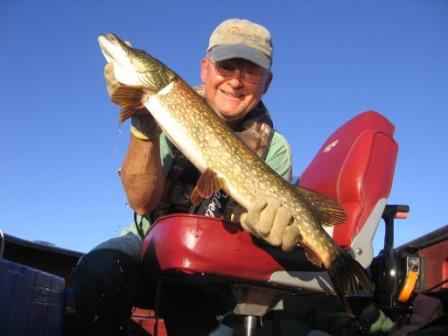 I caught and released this pike in Benoit Lake in October, 2016.  The fish took a safety pin style spinner at the deep weed line.